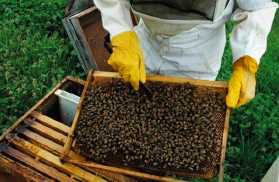 abeilles.png - 147.73 Ko