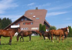 cheval.png - 121.47 Ko