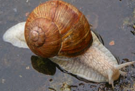 escargot.png - 120.62 Ko