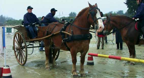cheval.jpg - 22.59 Ko