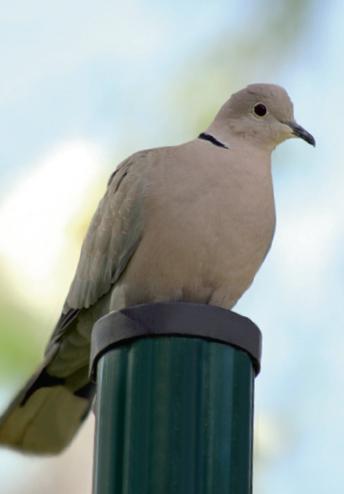 oiseau.JPG - 12.31 Ko