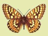 papillon.jpg - 11.58 Ko
